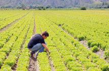 Puglia-terreni-ai-giovani-agricoltori-ecco-come-funziona